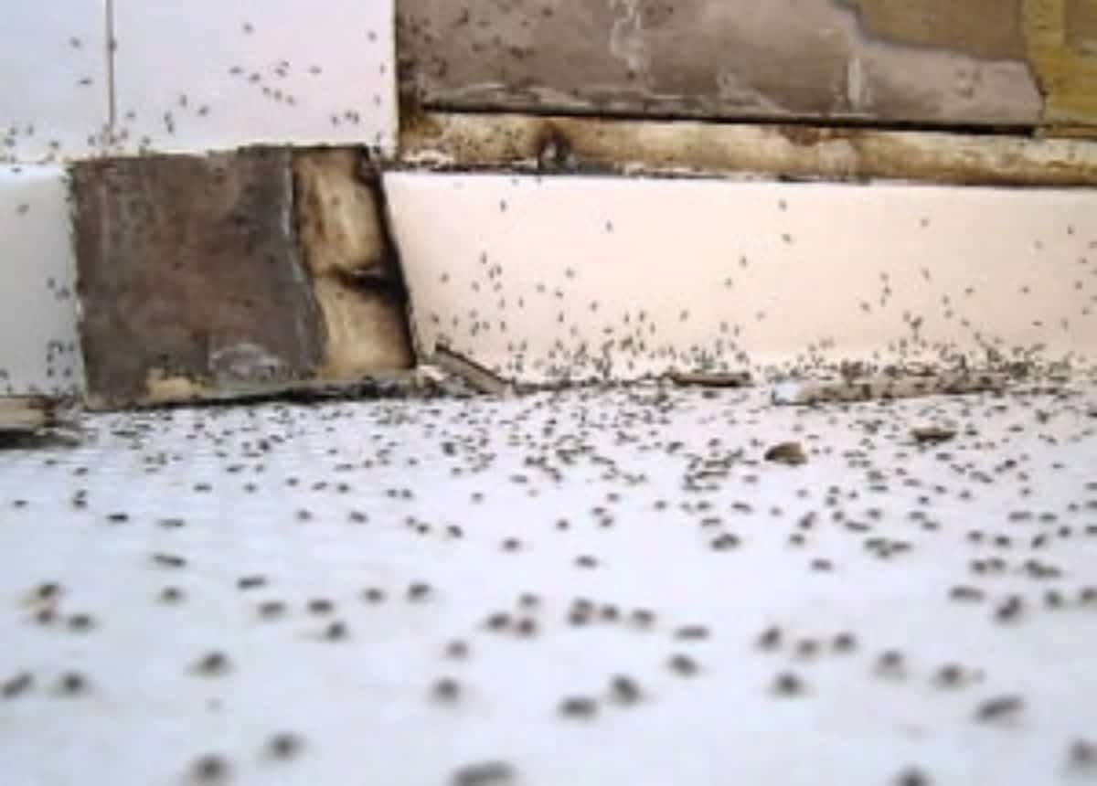 how to get rid of ants in the bathroom