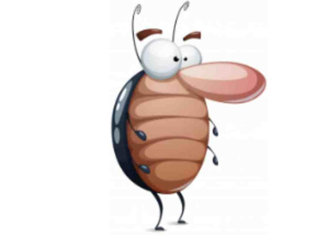 How To Get Rid Of Roaches In My Kitchen | Dandk Organizer