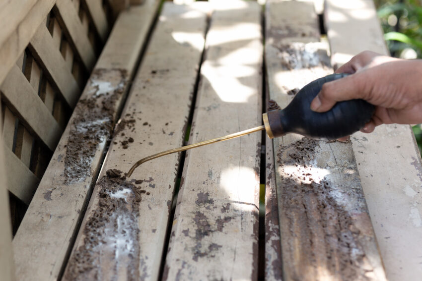 termite treatment cost,termite inspection cost