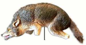 Coyote Decoy