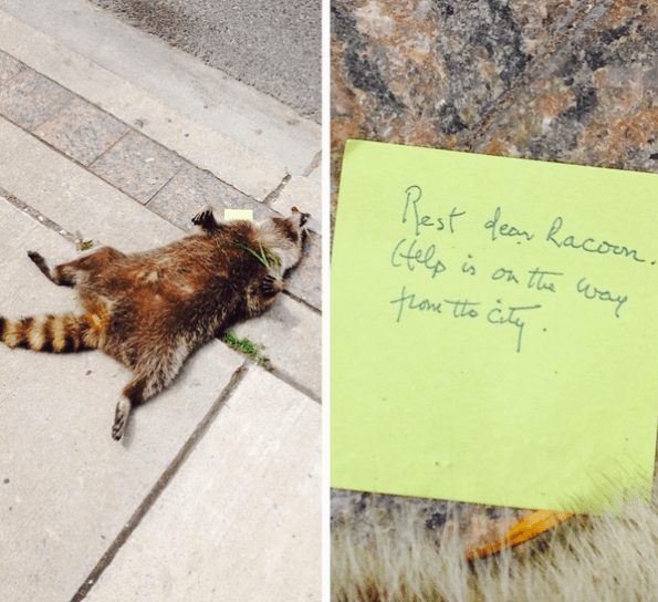 #DeadRaccoonTO