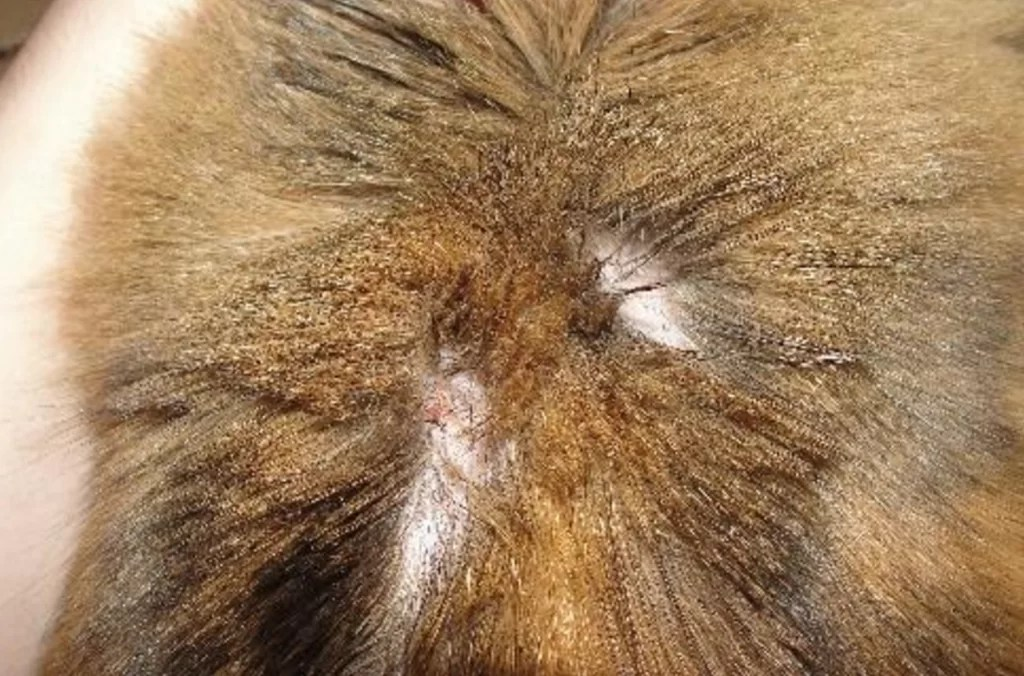 Image Result For Signs You Re Allergic To Cats