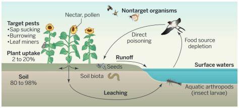 Dispersion des neonics et contamination environnementale