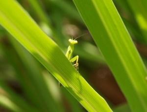 actions et biodiversité