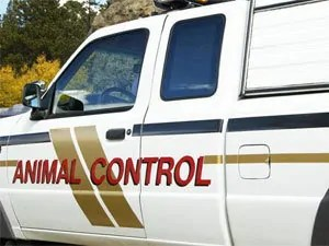 Accurate Pest & Animal Control