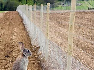 Animal netting installing