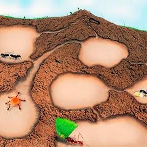Underground ant colony