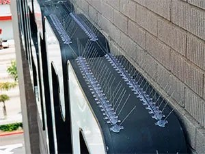 Anti bird spikes on ledges