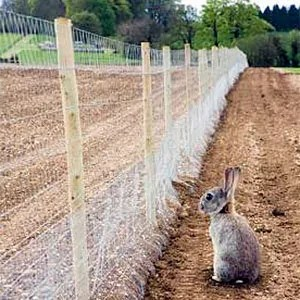 Anti-rabbits fence