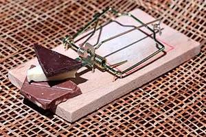 Bait for mouse trap