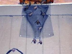 Bats exclusion device