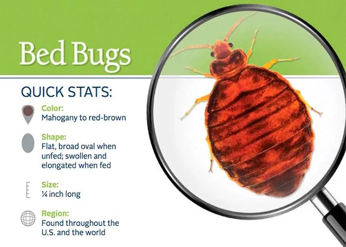 Bed bugs quick stats