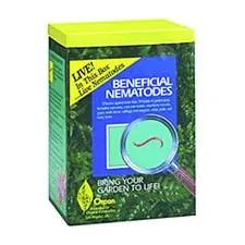 Beneficial nematodes for termite treatment