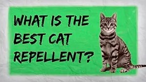 What is the best cat repellent