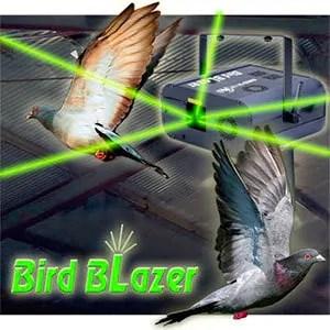 Bird blazer