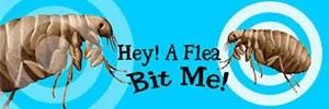 Bit me a flea