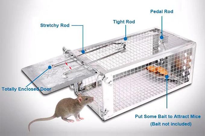 Cage mice trap