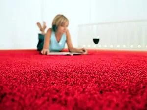 Fleas in the carpet