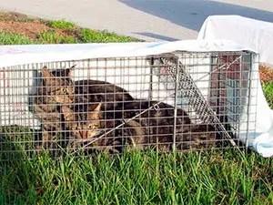Choose an effective cat trap
