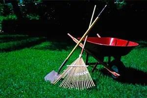 Clean your garden