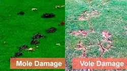 Damage difference