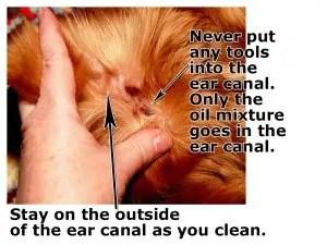 Dog mites treatment