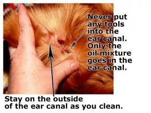 Make Your Cat or Dog Ear-Mites Free: How to Get Rid of Ear ... Ear Mites Vs. Yeast Infection In Dogs