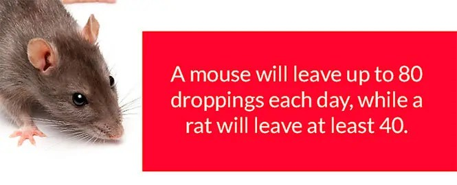Mice and rats droppings amount