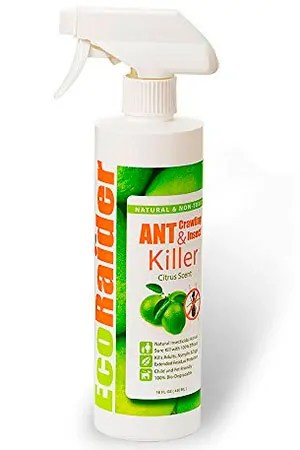 Killing Ants In Kitchen Cabinets