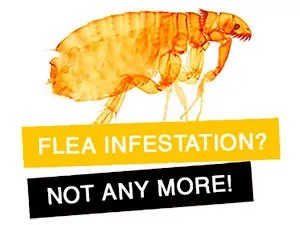 Not any more flea infestation