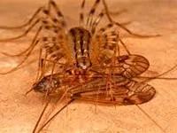 Centipedes food