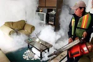 Fumigation bedbugs removal