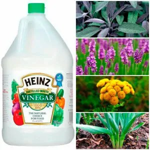 Herbs and vinegar