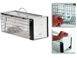 Kness cage chipmunk trap