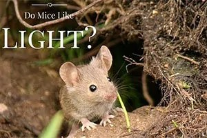 Do mice like Light?