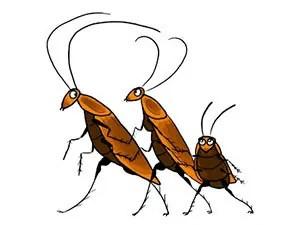 How do bugs look like