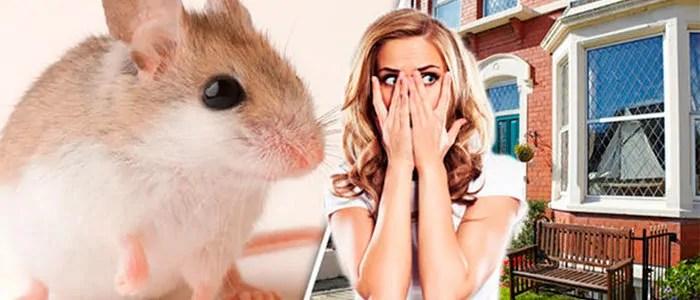 Keep your mice away