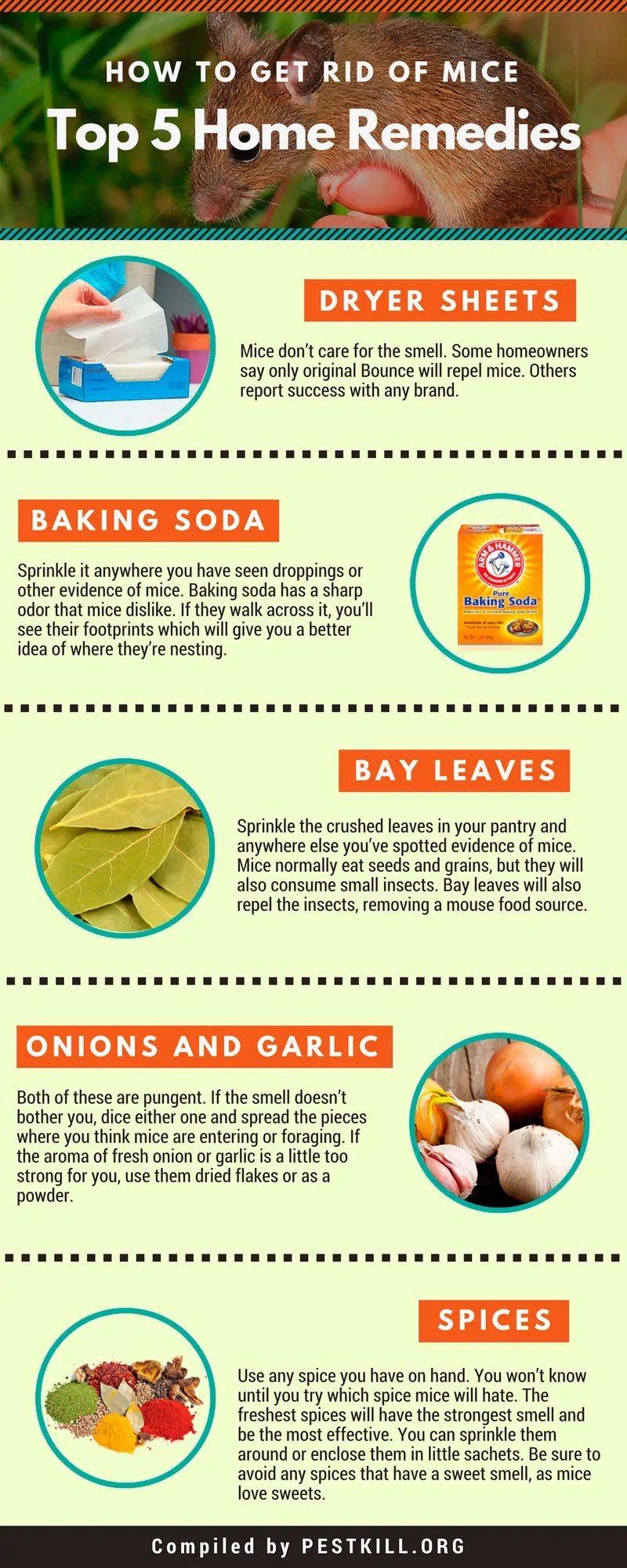 Infographic: Top 5 Home Remedies to Get Rid of Mice