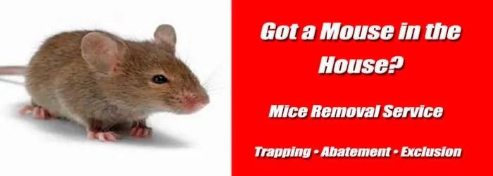 Mice Removal Service