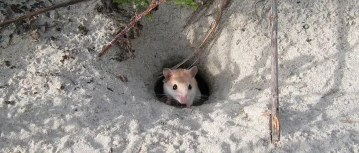 Mouse at hole