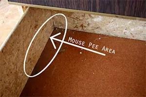 Mouse Pee Area