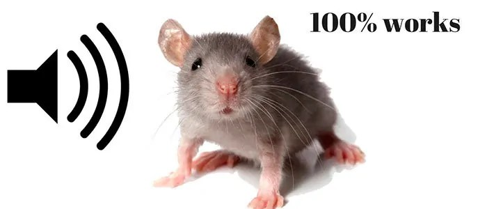 No More Mice
