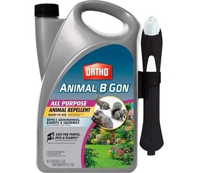 ORTHO Animal B Gon