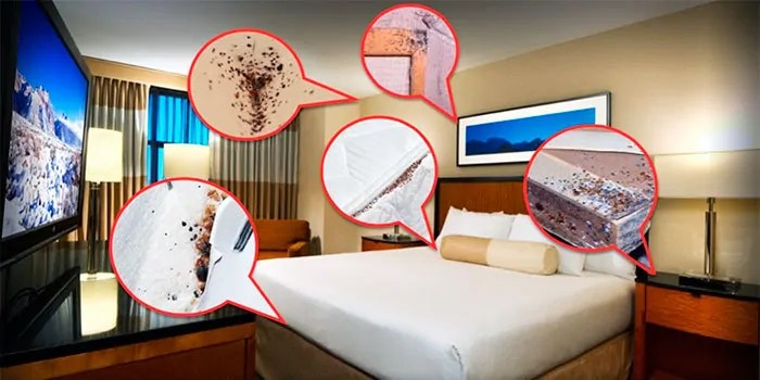 Bed bugs places