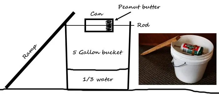 Bucket mouse trap plan