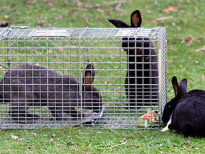 Trap for rabbits