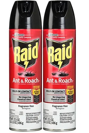 All You Need to Know About How to Get Rid of Ants
