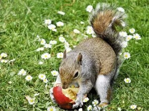 Easy ways for squirrels repelling