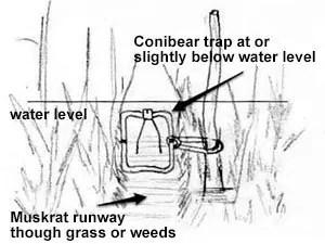 Muskrat Runway Set