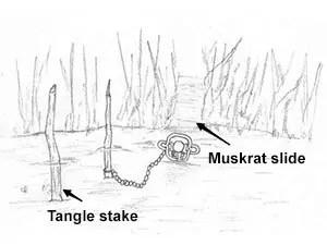 Muskrat slide set